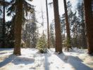 zelenye-gorki-foto-4