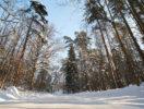 zelenye-gorki-foto-5