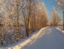 uchastok-16-sotok-izhs-v-derevne-manushkino-foto-3