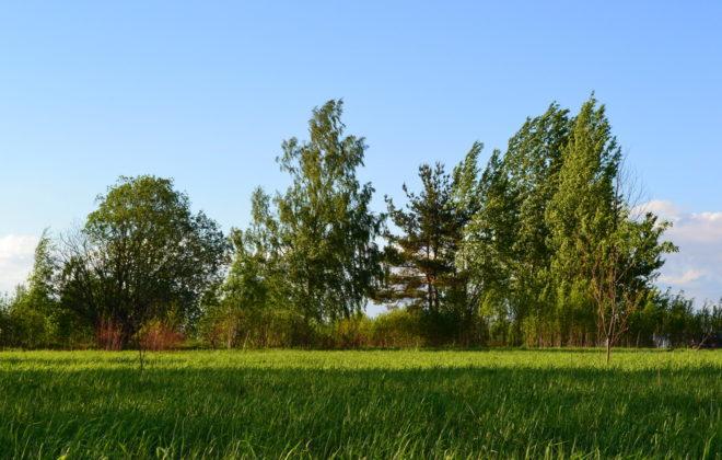 uchastok-13-sotok-v-bolshom-konovalovo-foto-1