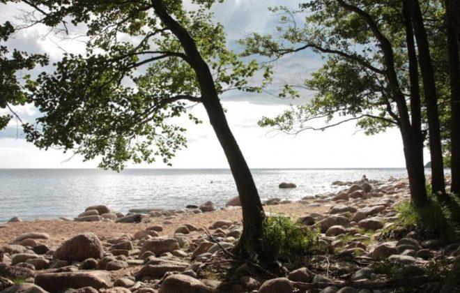uchastok-31-sotki-u-finskogo-zaliva-foto-1