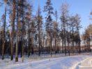 uchastok-20-sotki-u-reki-privetnaya-foto-1