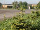 uchastok-13-sotki-u-petrovo-foto-1
